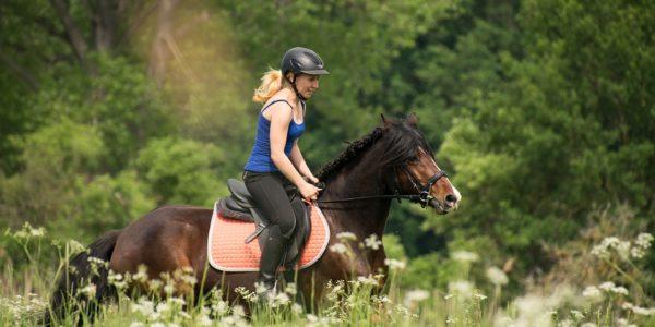 Das Einmaleins der Pferdewelt